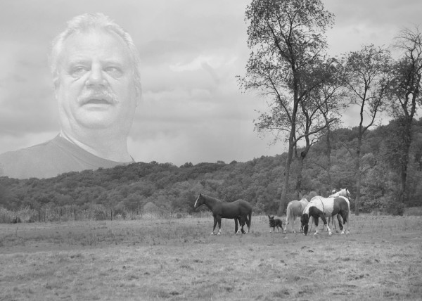 toby-horses-black-white-copy